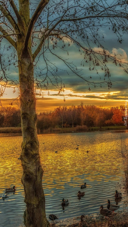Kaczki na jeziorze w parku