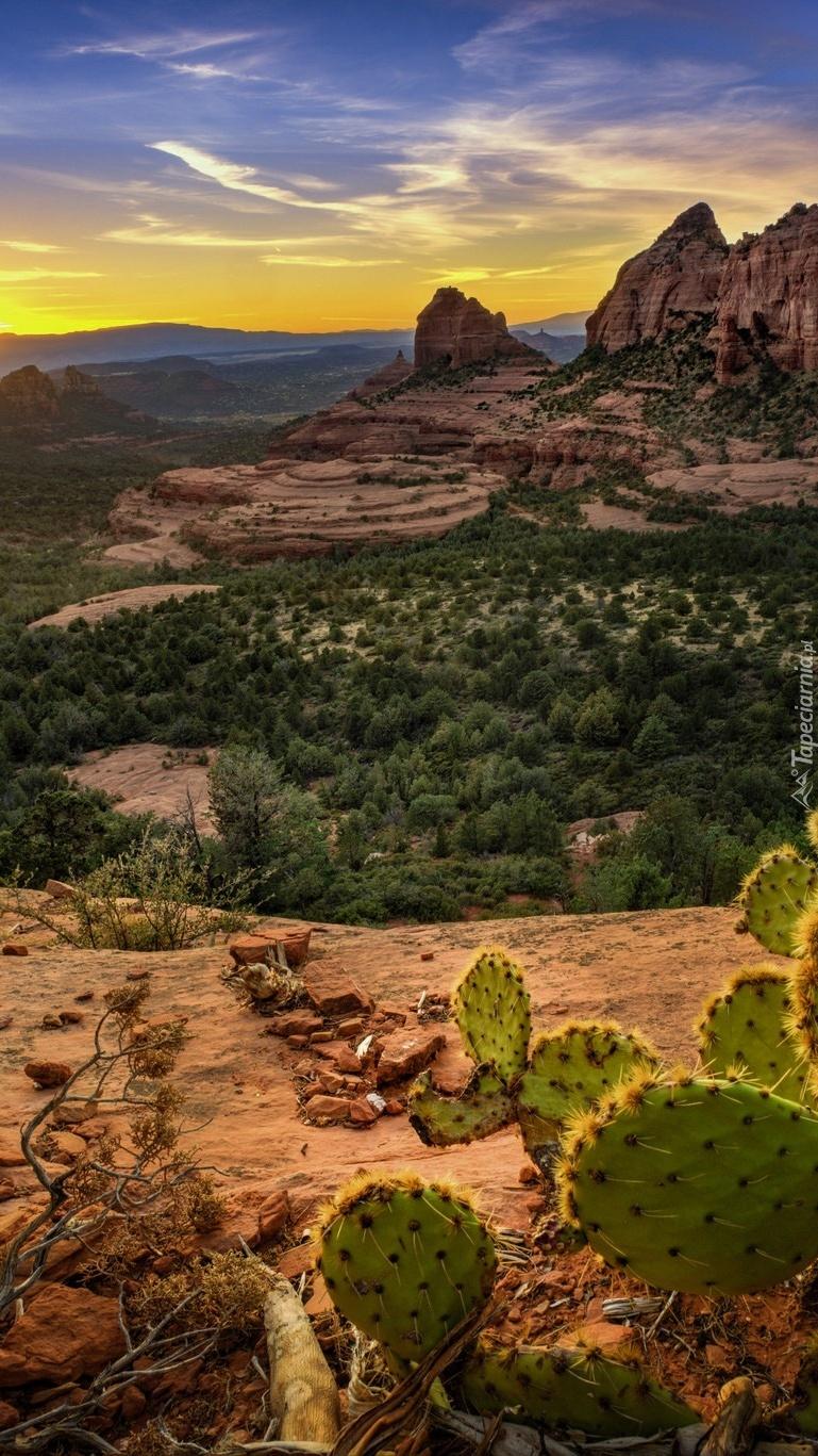 Kaktusy i drzewa w Arizonie