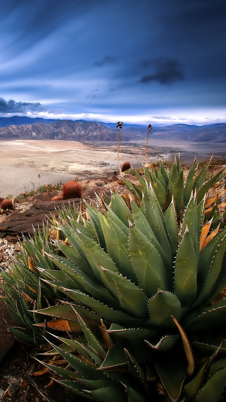 Kaktusy na pustyni