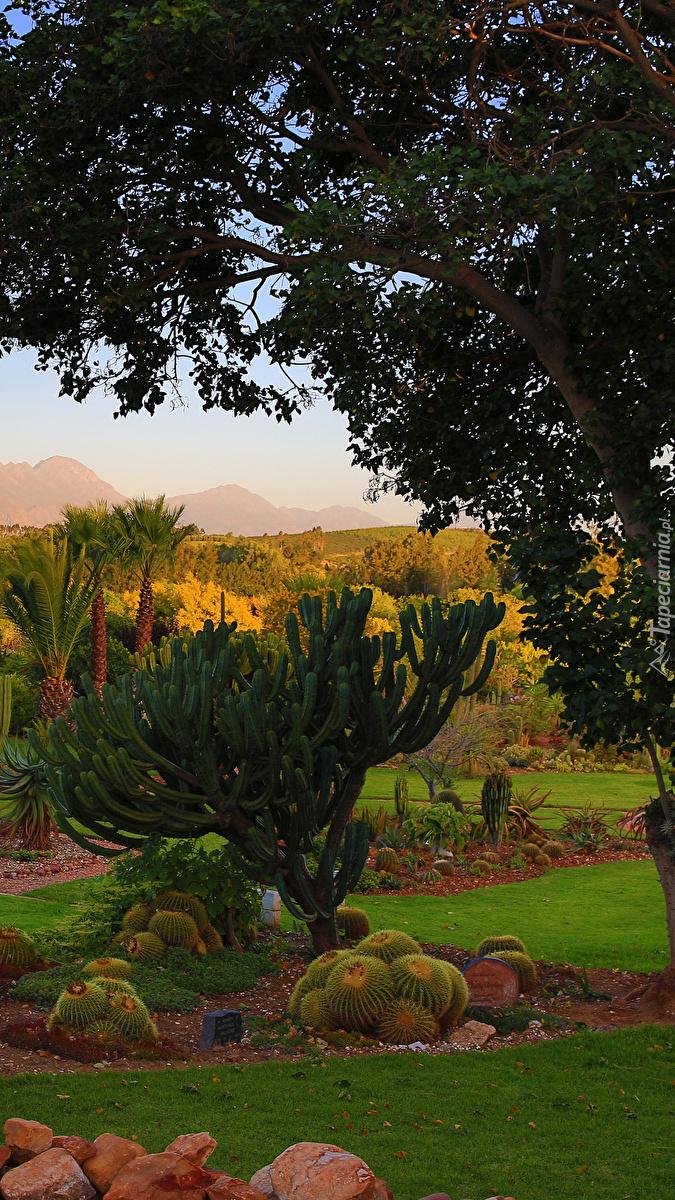 Kaktusy pod drzewem w parku