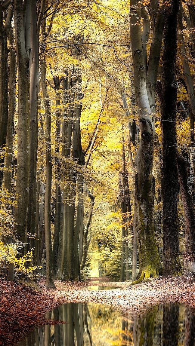 Kałuże na leśnej drodze