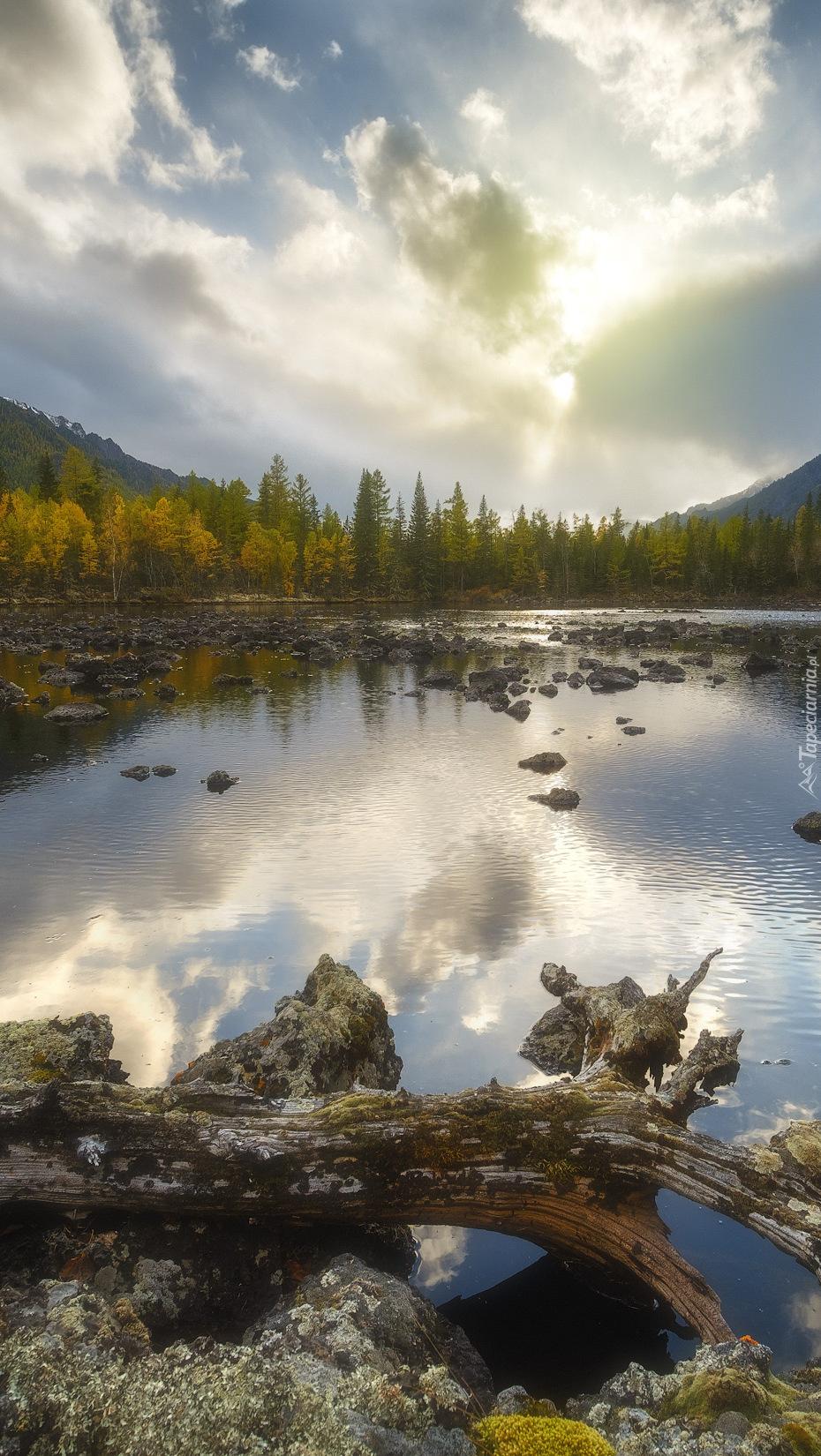Kamienie i konar na brzegu jeziora