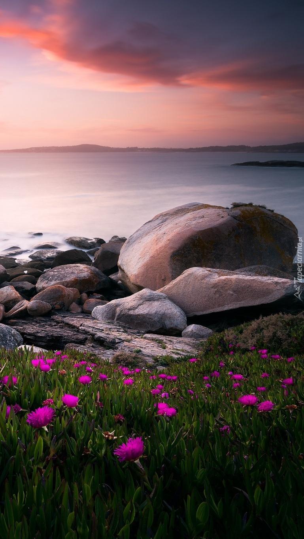 Kamienie i kwiaty na brzegu morza