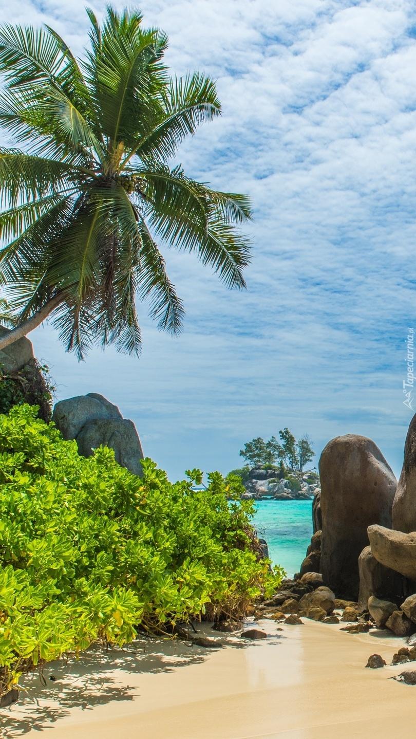 Kamienie i palmy na plaży