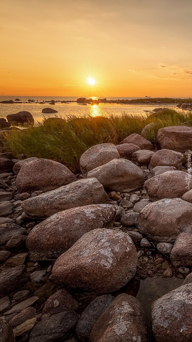 Kamienie i trawa na brzegu morza