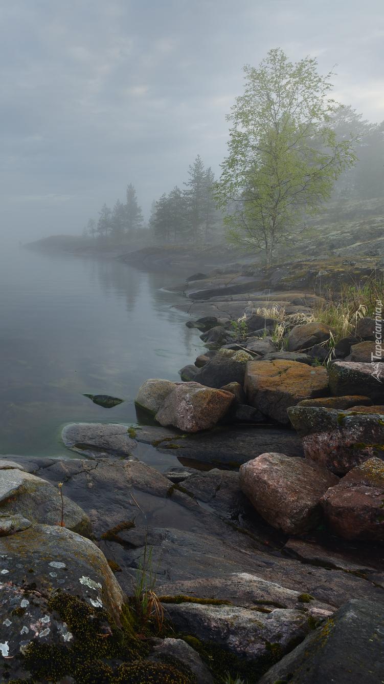 Kamienie na brzegu jeziora we mgle