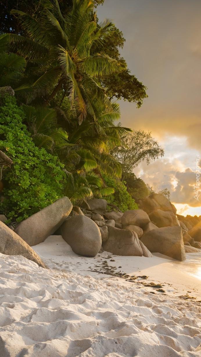 Kamienie na plaży pod palmami