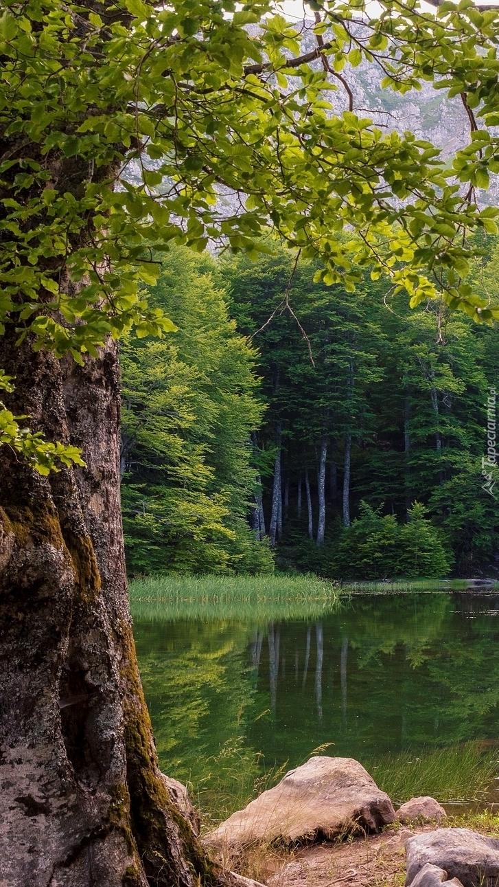 Kamienie obok drzewa przy leśnym jeziorze