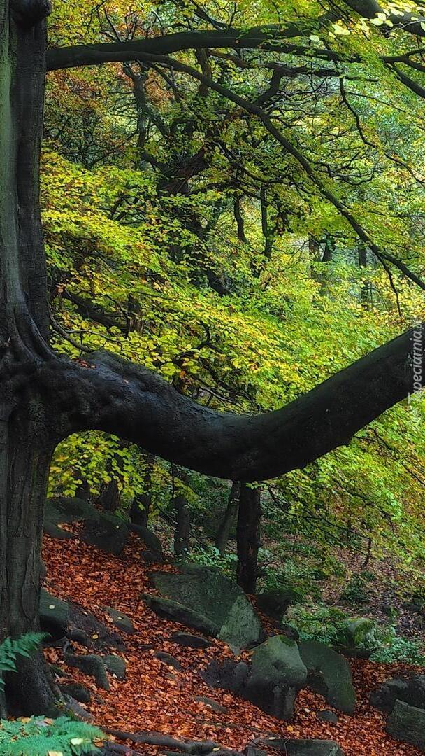 Kamienie pod drzewami w lesie