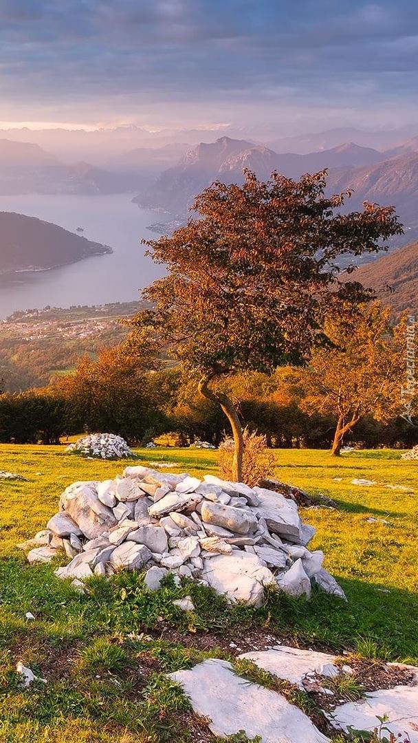 Kamienie pod drzewem