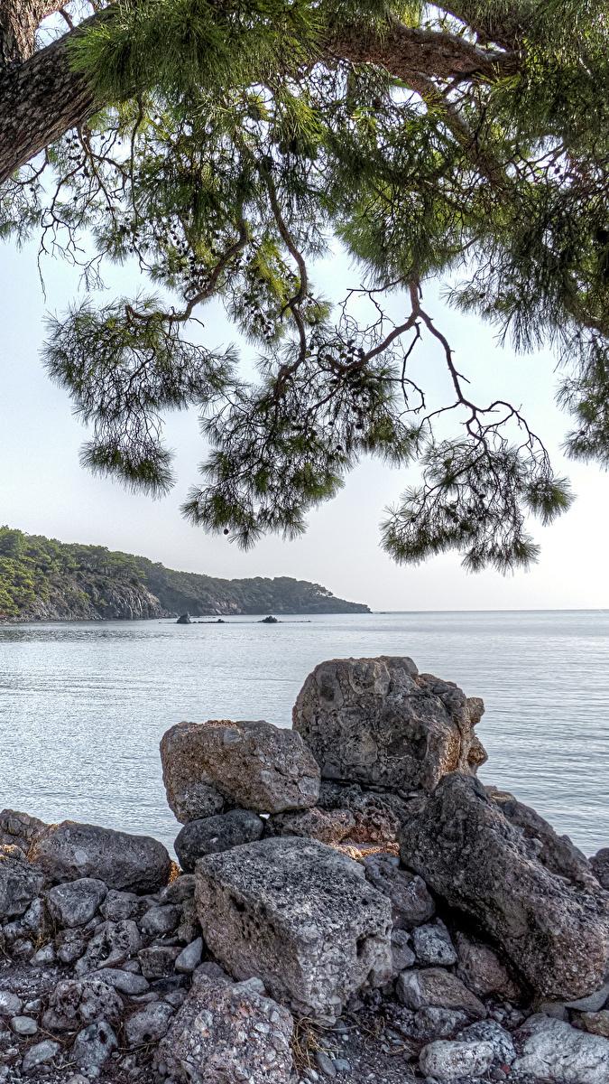 Kamienie pod gałęziami sosny