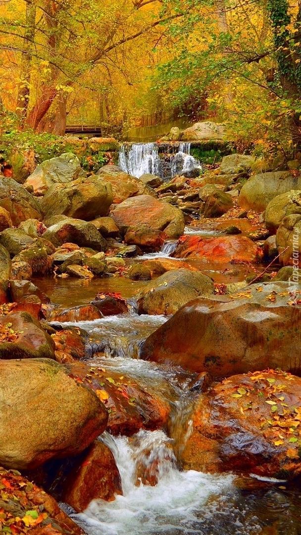 Kamienie w leśnej rzece