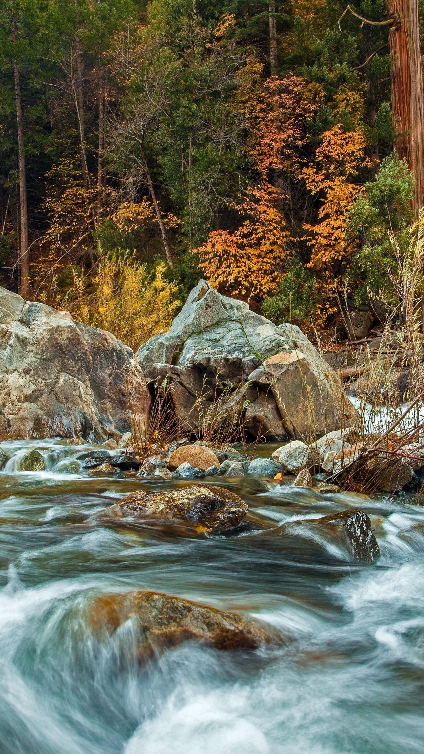 Kamienista rzeka w lesie
