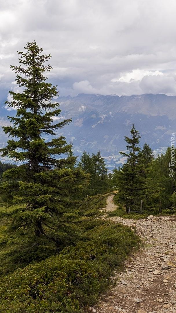 Kamienista ścieżka wśród drzew