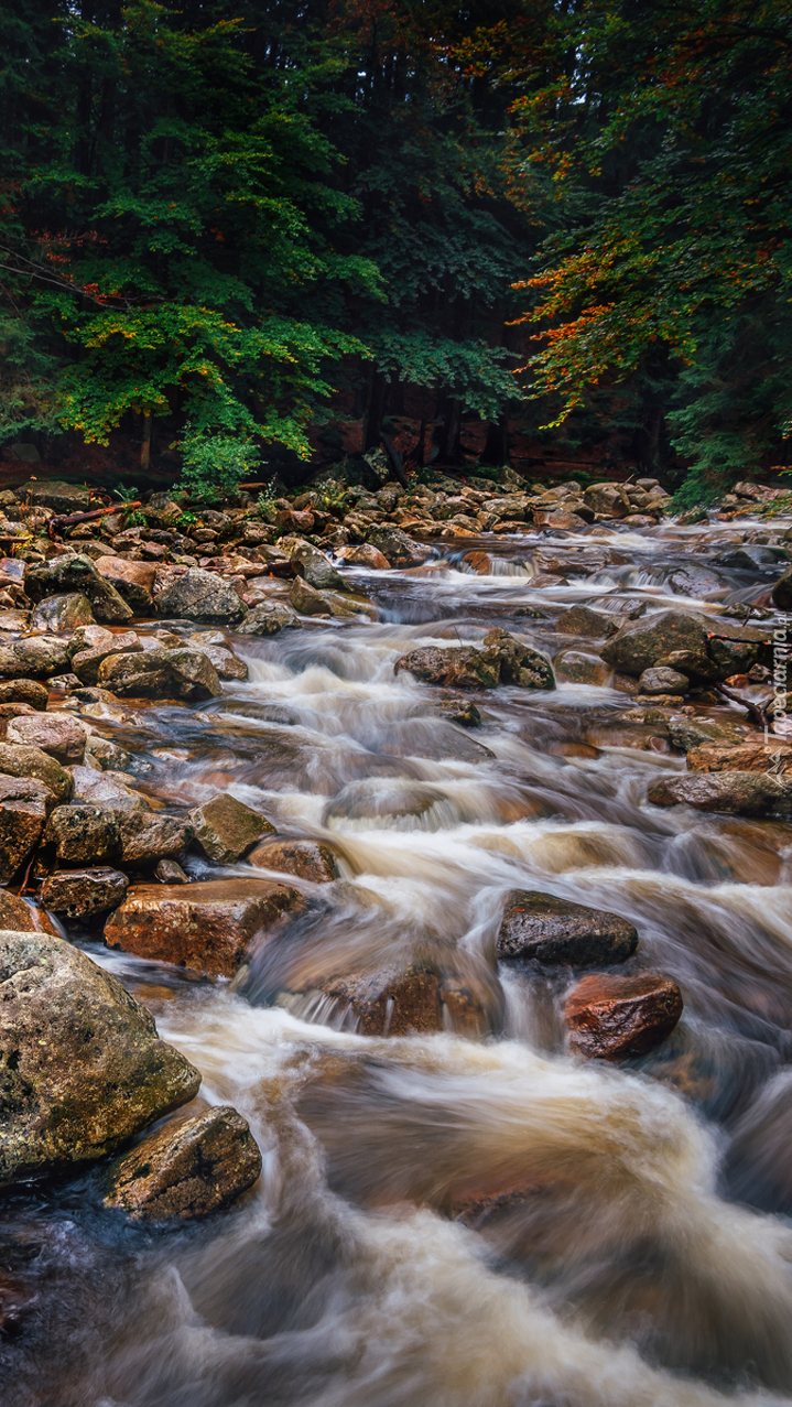 Kamienisty potok