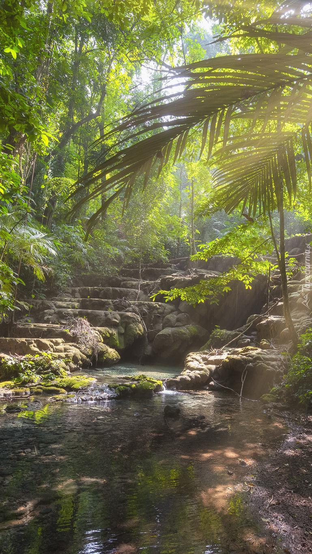 Kamienne schody w dżungli