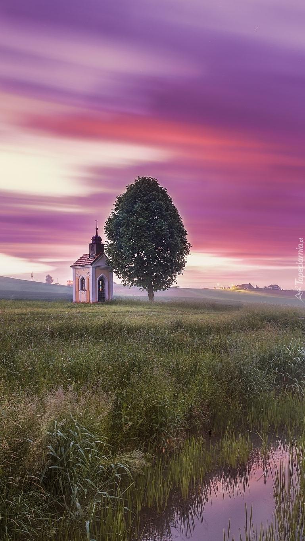 Kapliczka obok drzewa