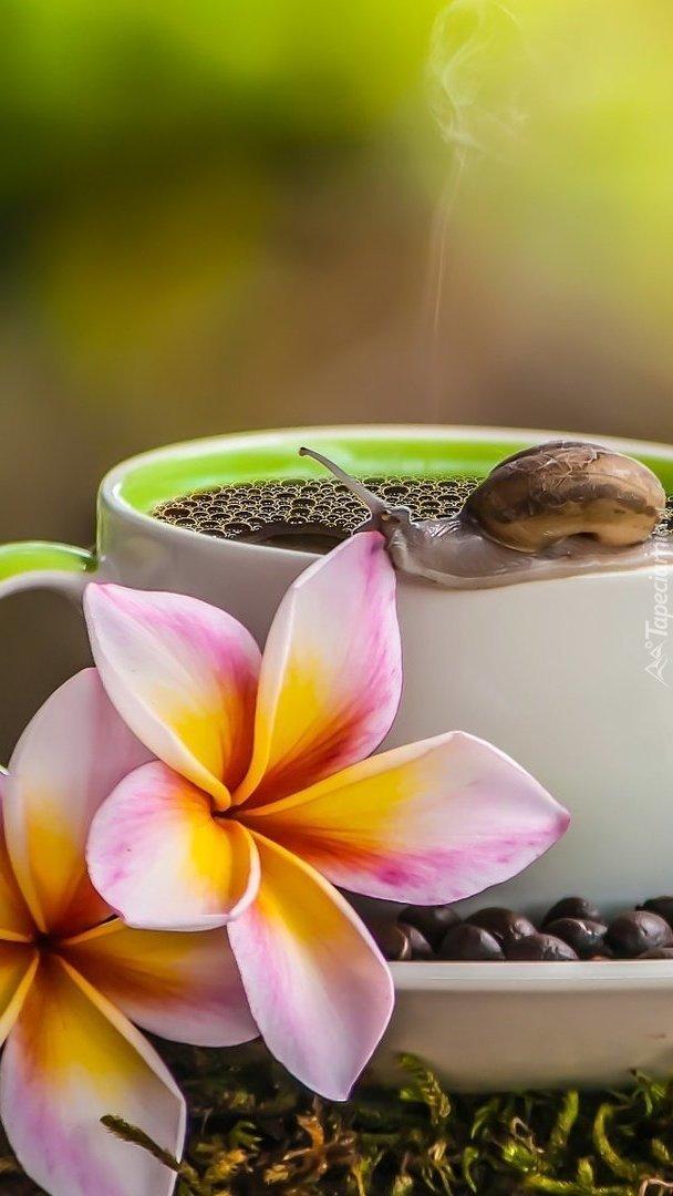 Kawa z gościem