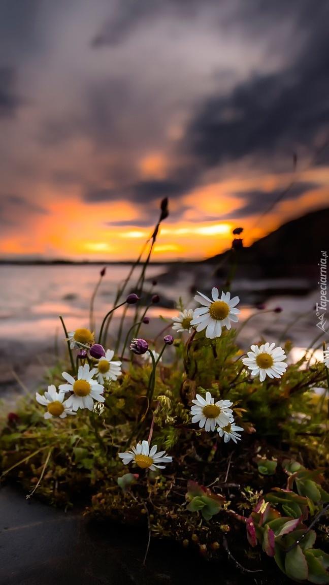 Kępka kwiatów nad morzem