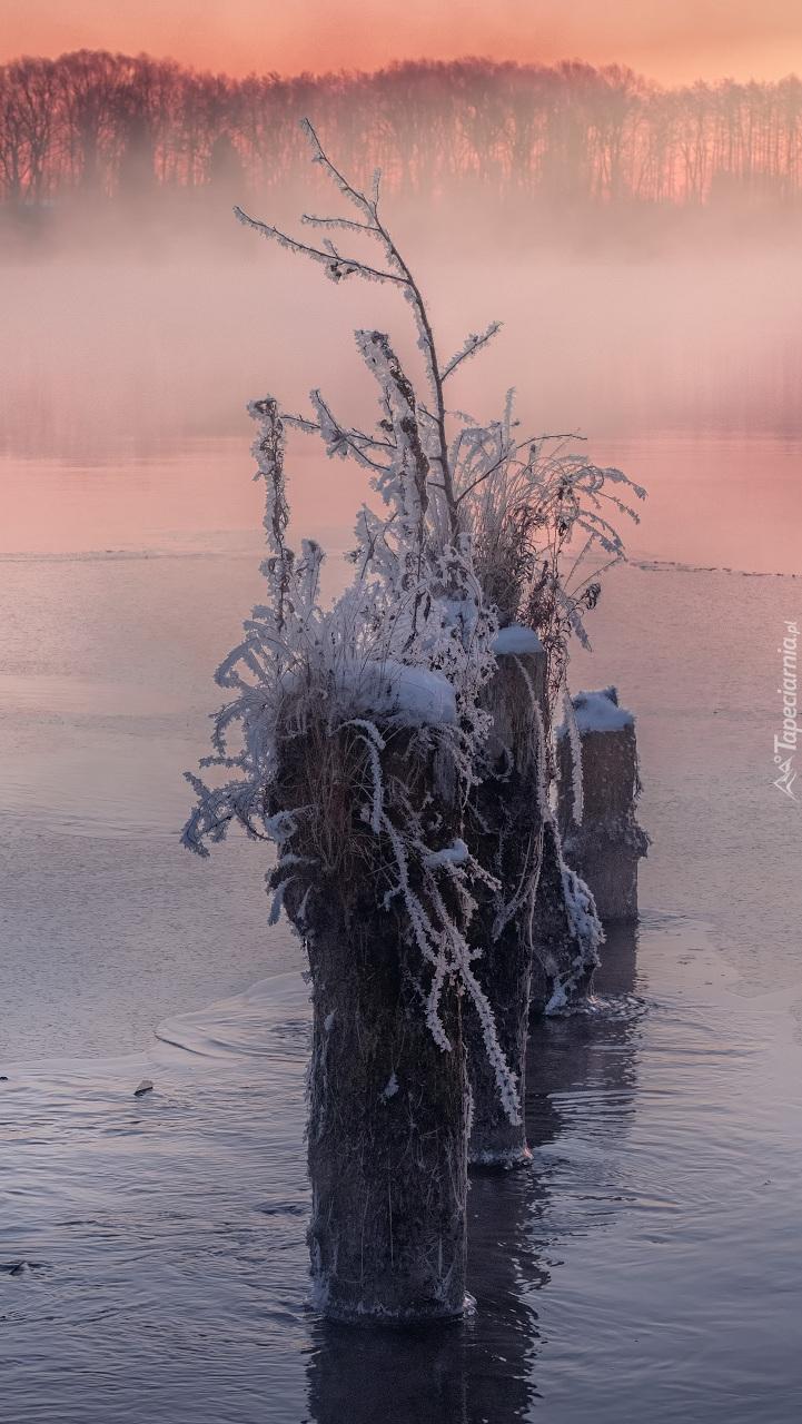 Kępka oszronionych roślin na jeziorze