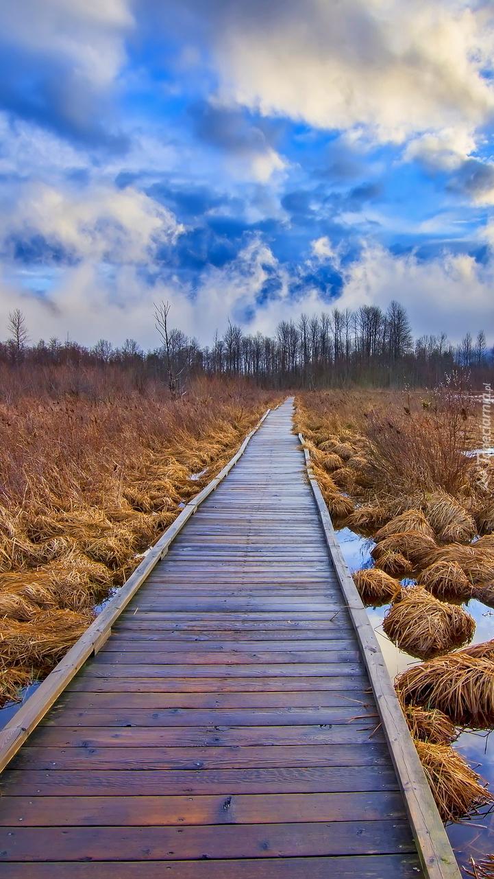 Kępki traw wzdłuż pomostu na jeziorze One Mile