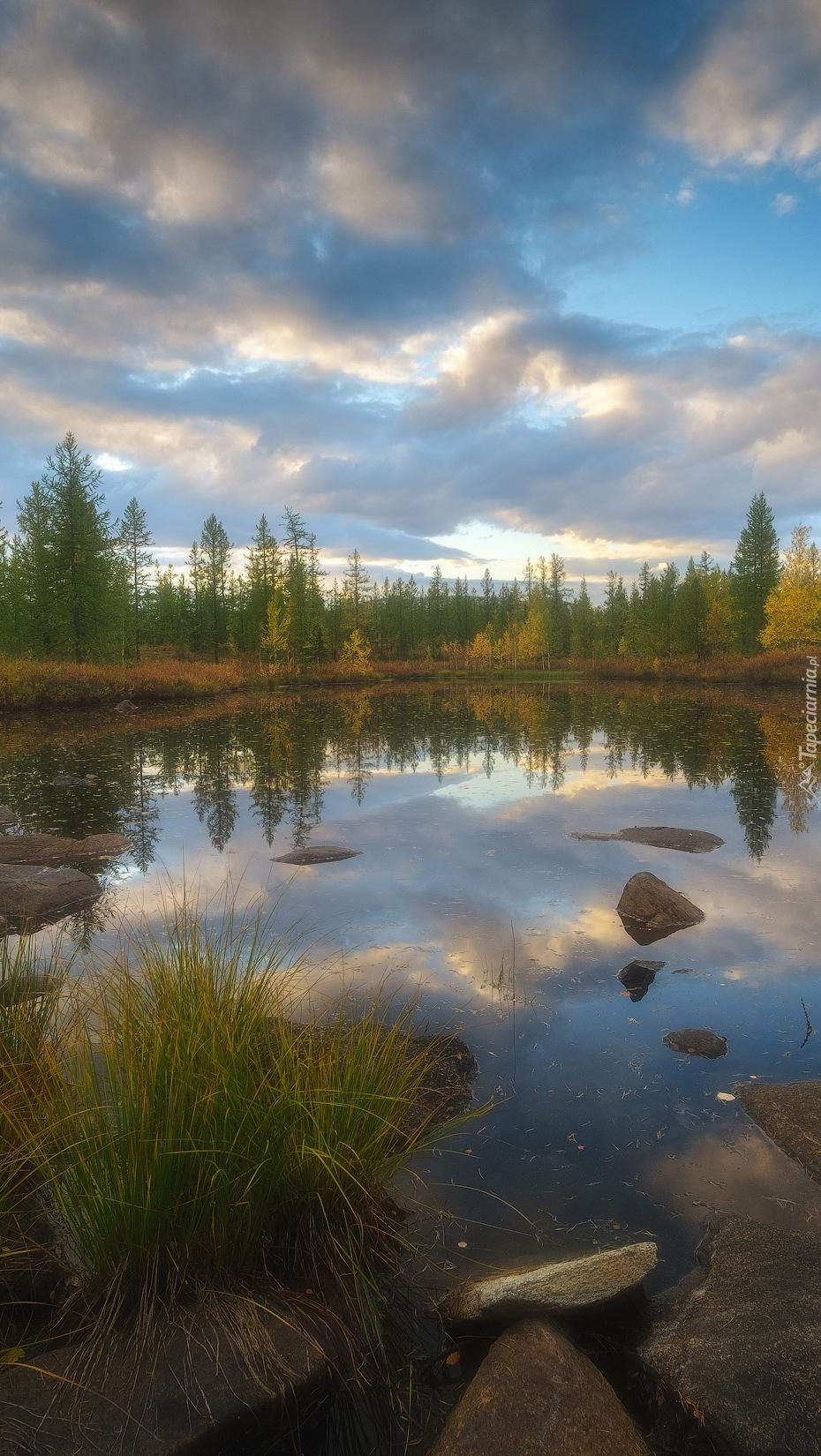 Kępki trawy i kamienie w jeziorze