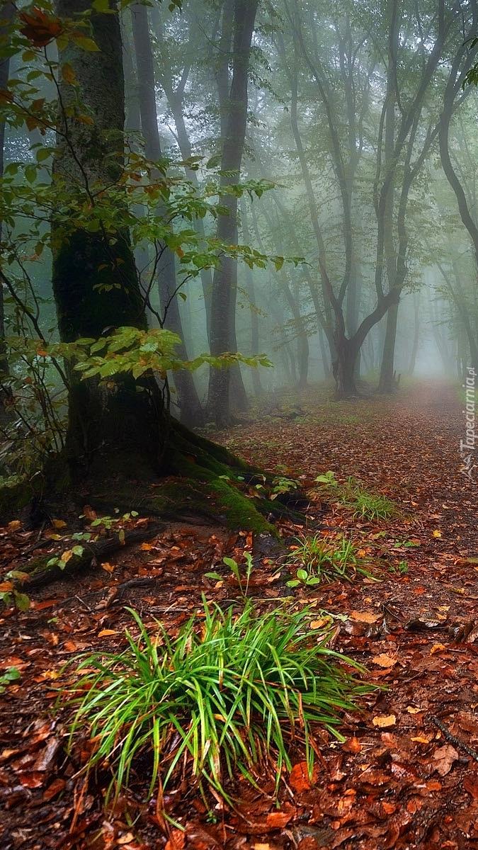 Kępki trawy w lesie