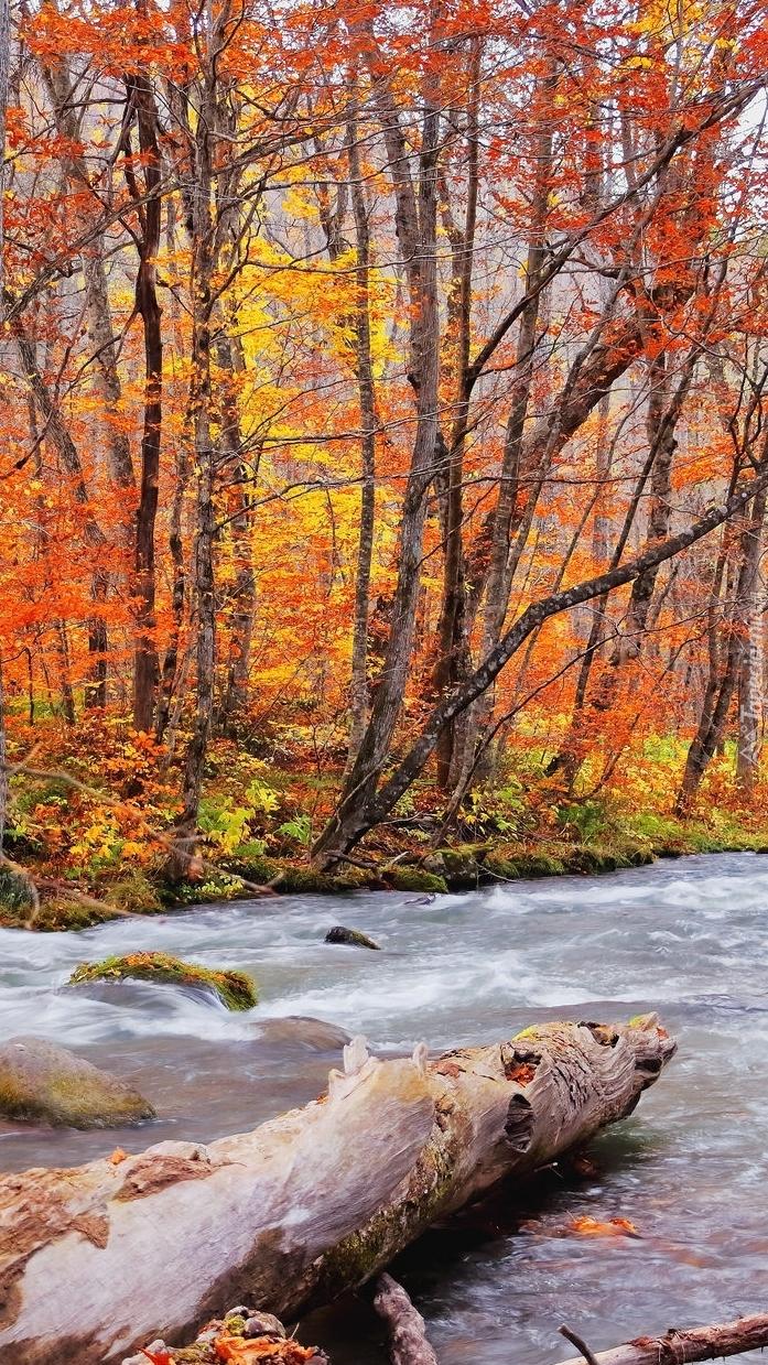 Kłoda w leśnej rzece