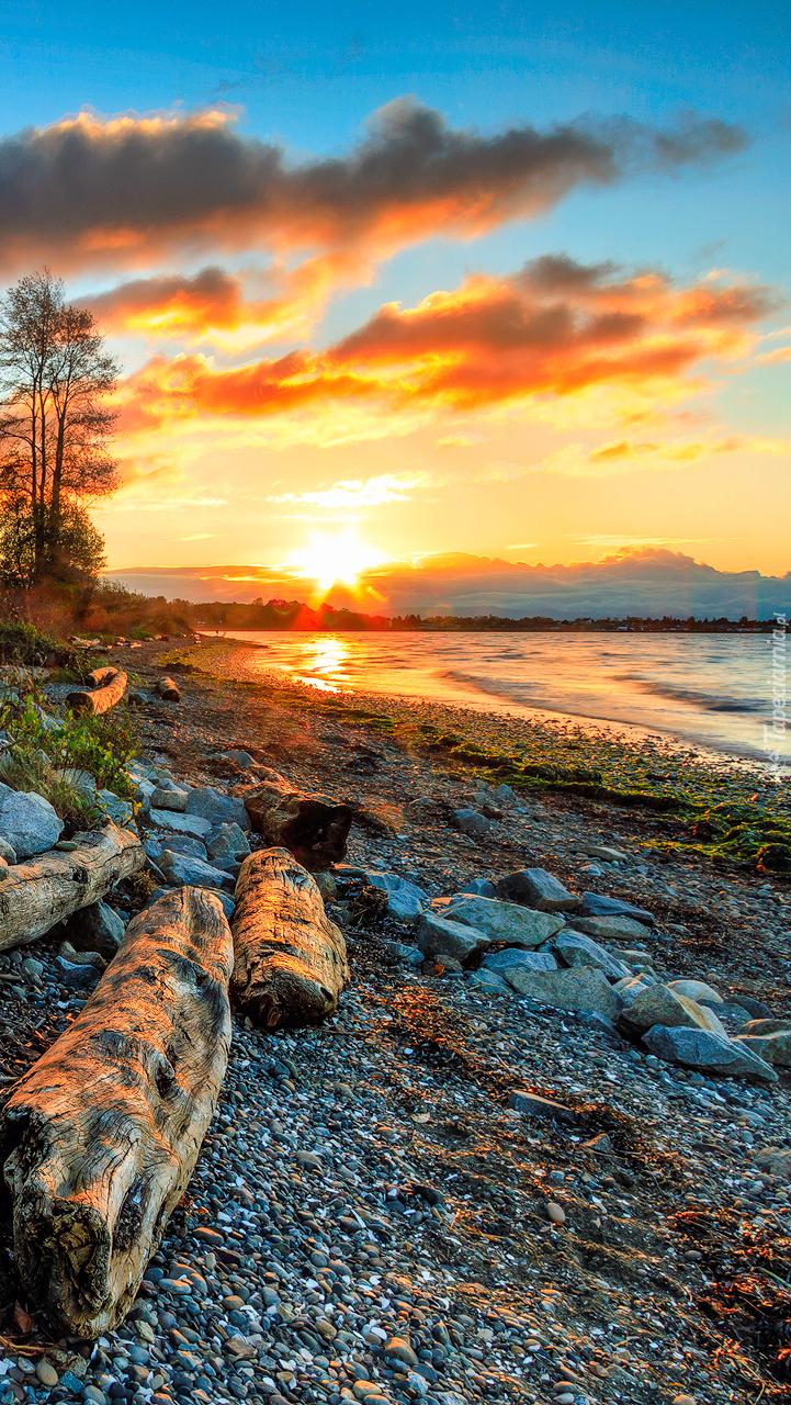 Kłody drzewa i kamienie na brzegu morza