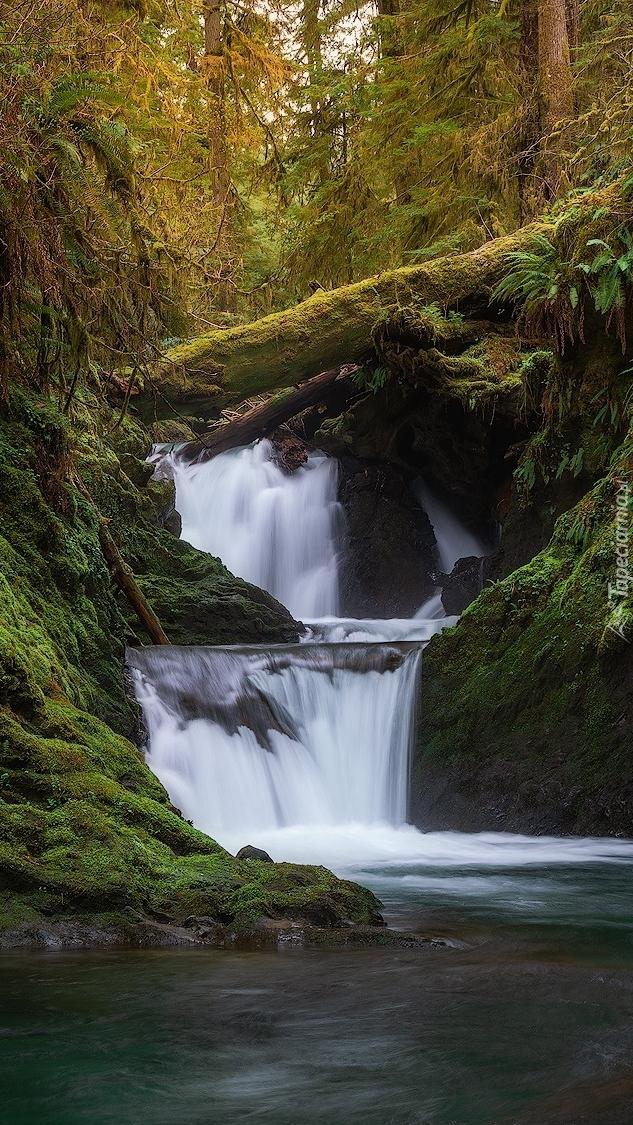 Kłody na leśnym wodospadzie