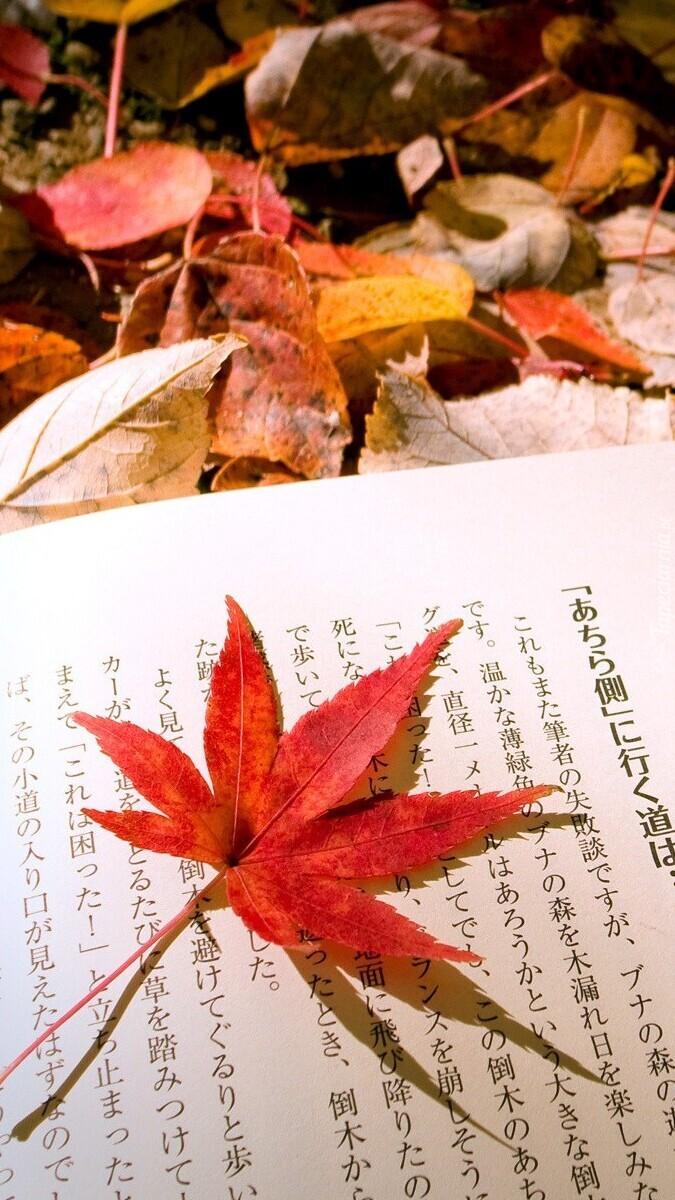 Klonowy liść na książce