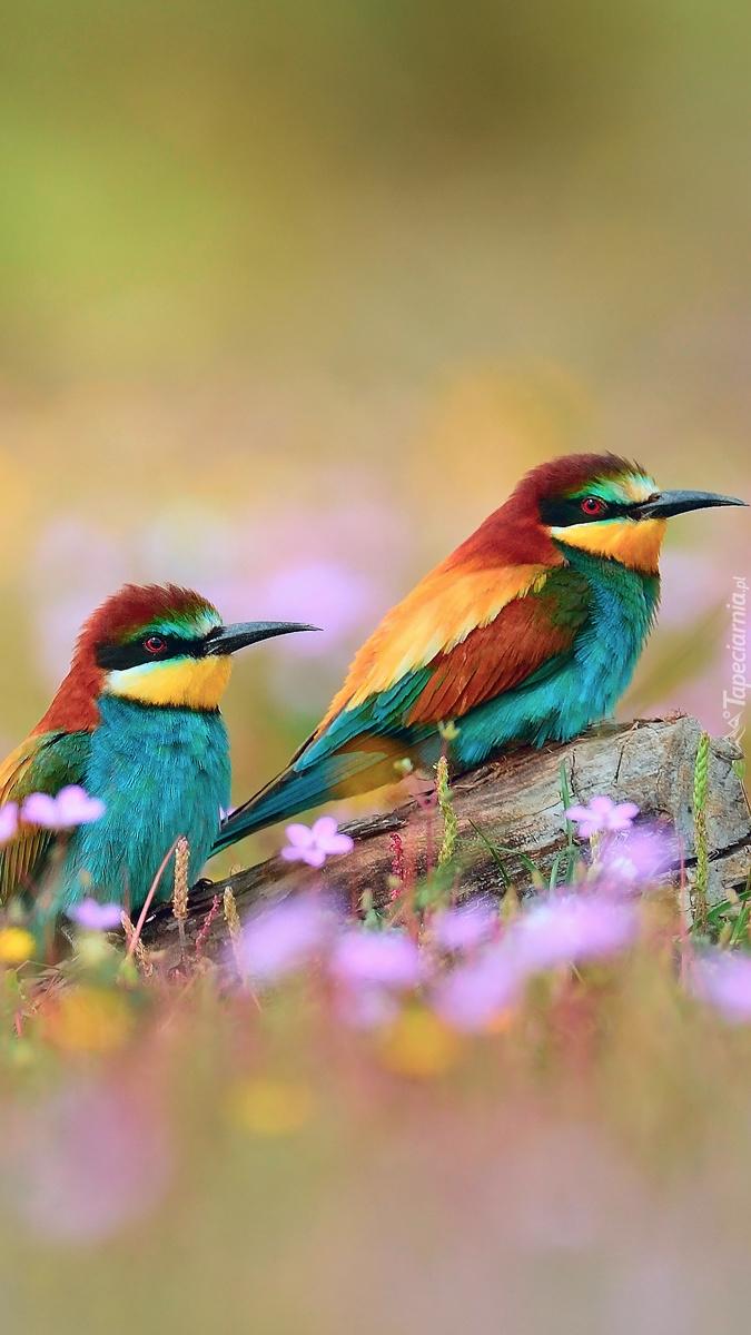 Klorowe ptaszki siedzące na łące