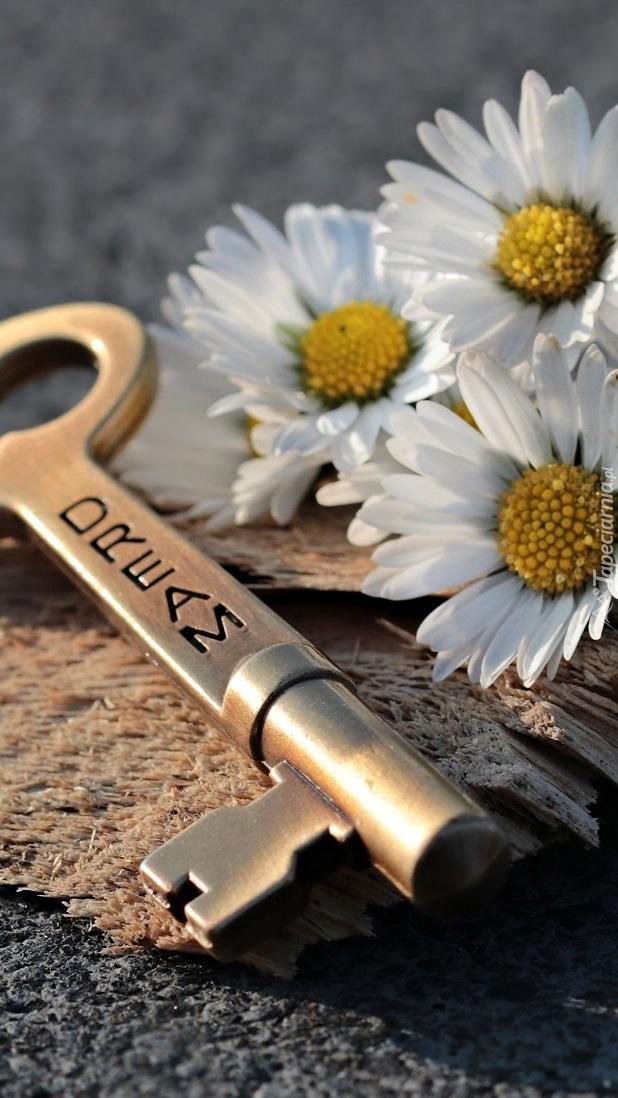 Klucz i stokrotki