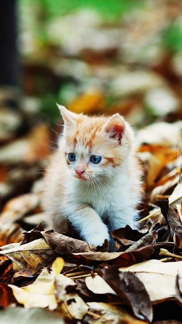 Kociak na jesiennych liściach