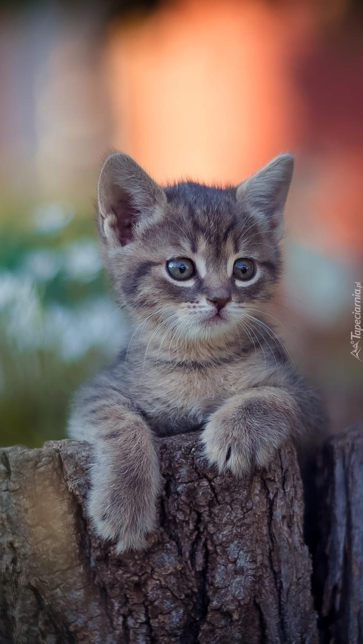 Kociak na płocie