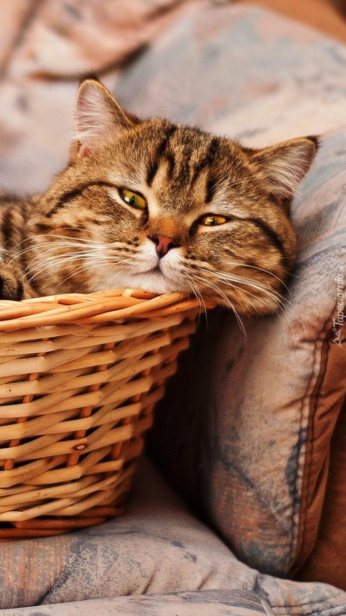 Kociak w koszyku