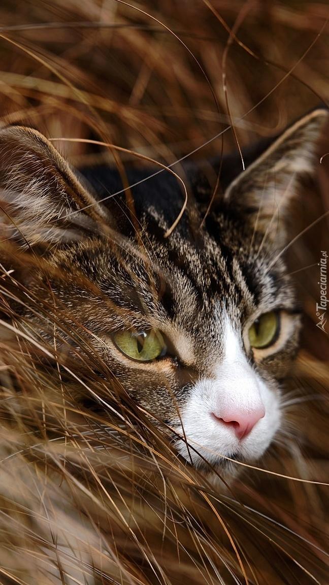 Kociak w trawie