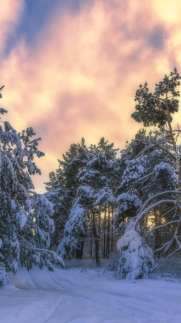 Kolorowe chmury nad ośnieżonym lasem