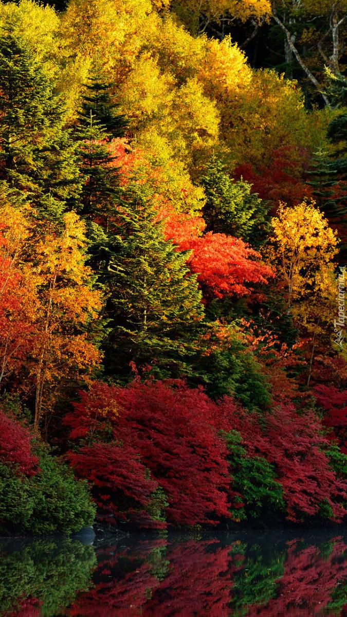 Kolorowe drzewa i krzewy nad rzeką