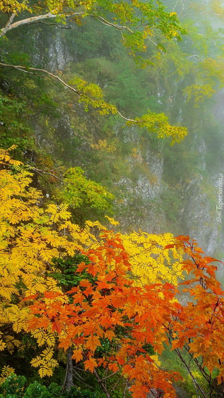 Kolorowe drzewa na skale
