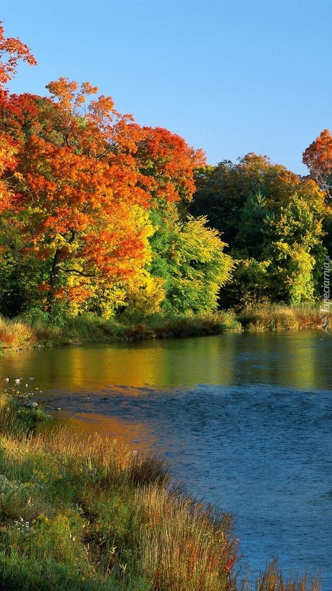 Kolorowe drzewa nad rzeką