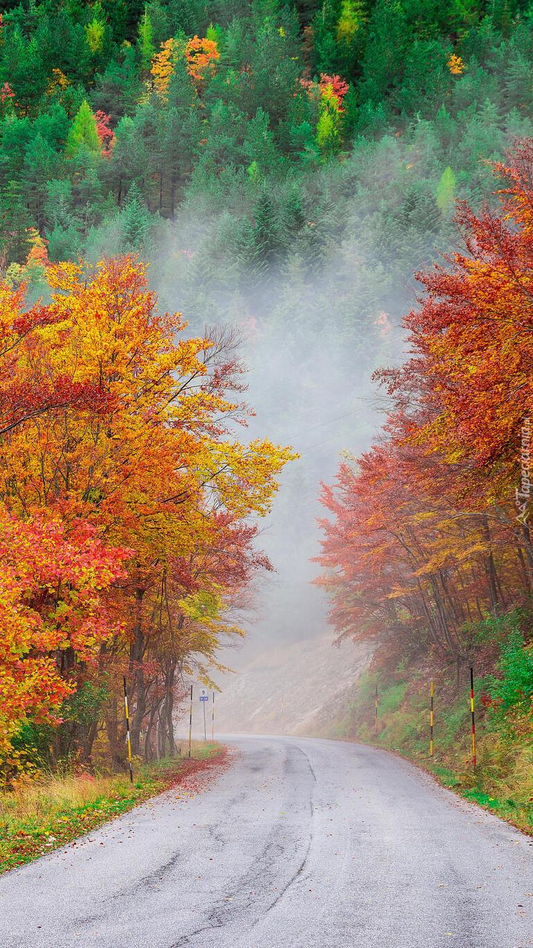 Kolorowe drzewa przy drodze