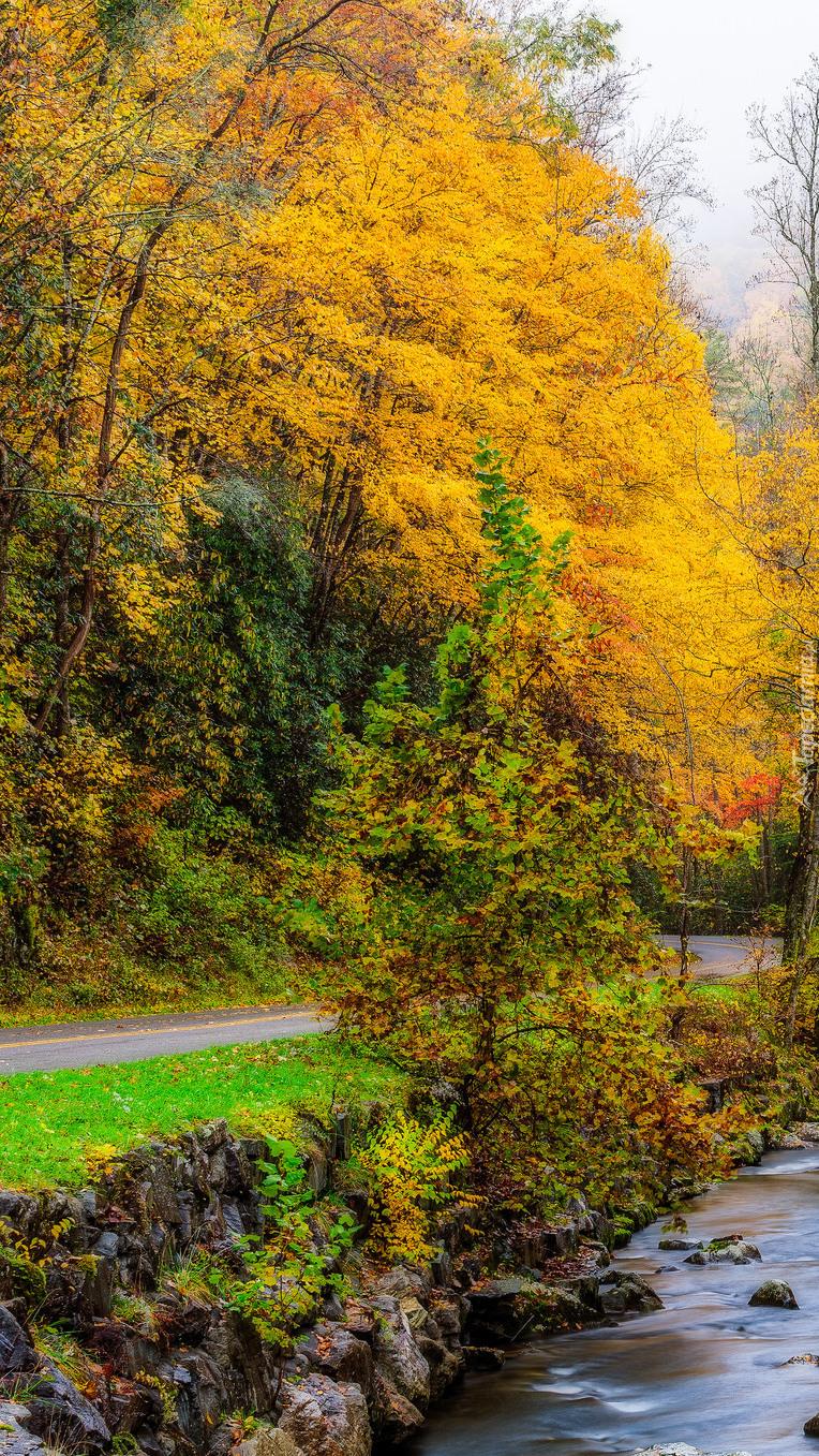 Kolorowe drzewa przy rzece