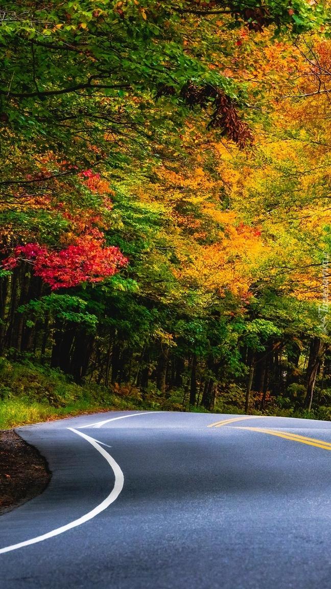 Kolorowe drzewa przy zakręcie