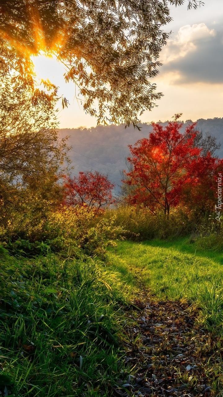 Kolorowe drzewa w promieniach słońca