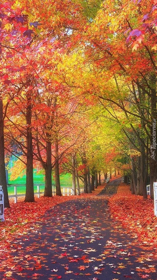 Kolorowe drzewa wzdłuż drogi