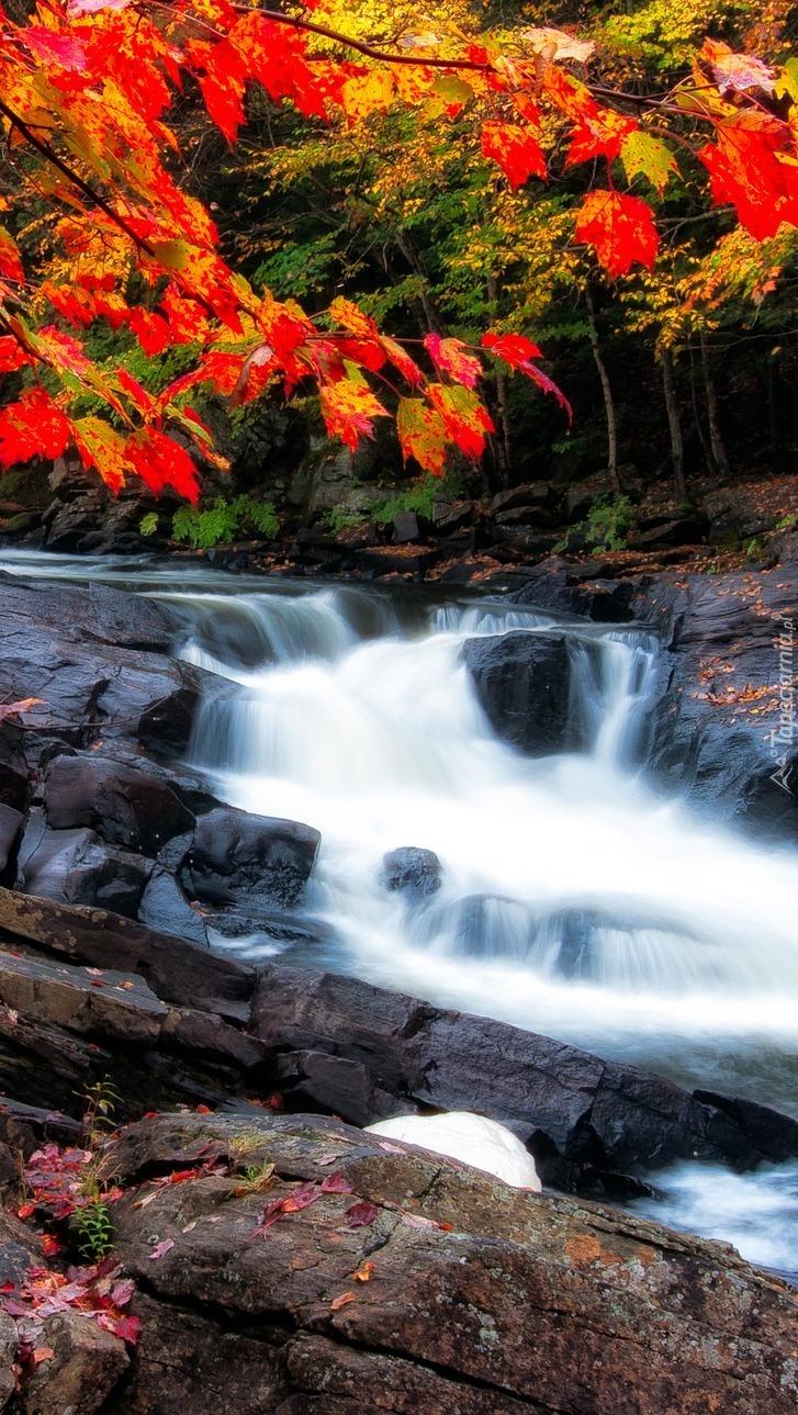 Kolorowe gałęzie nad rzeką