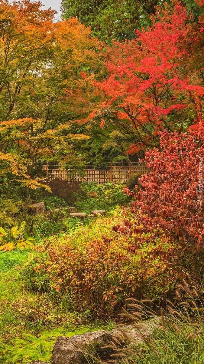 Kolorowe jesienne drzewa w parku