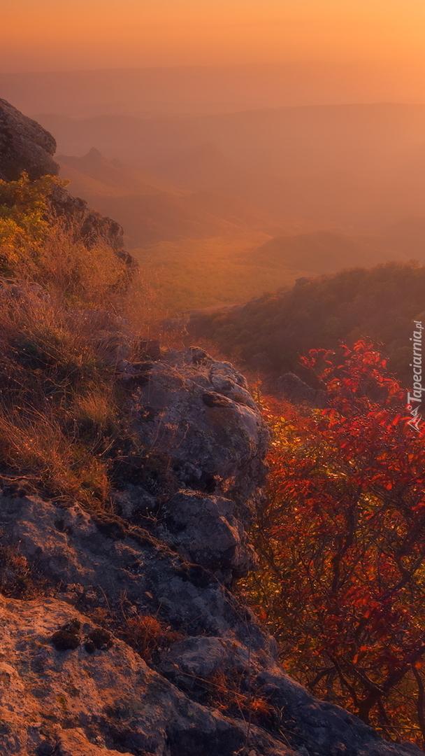 Kolorowe krzewy na skałach