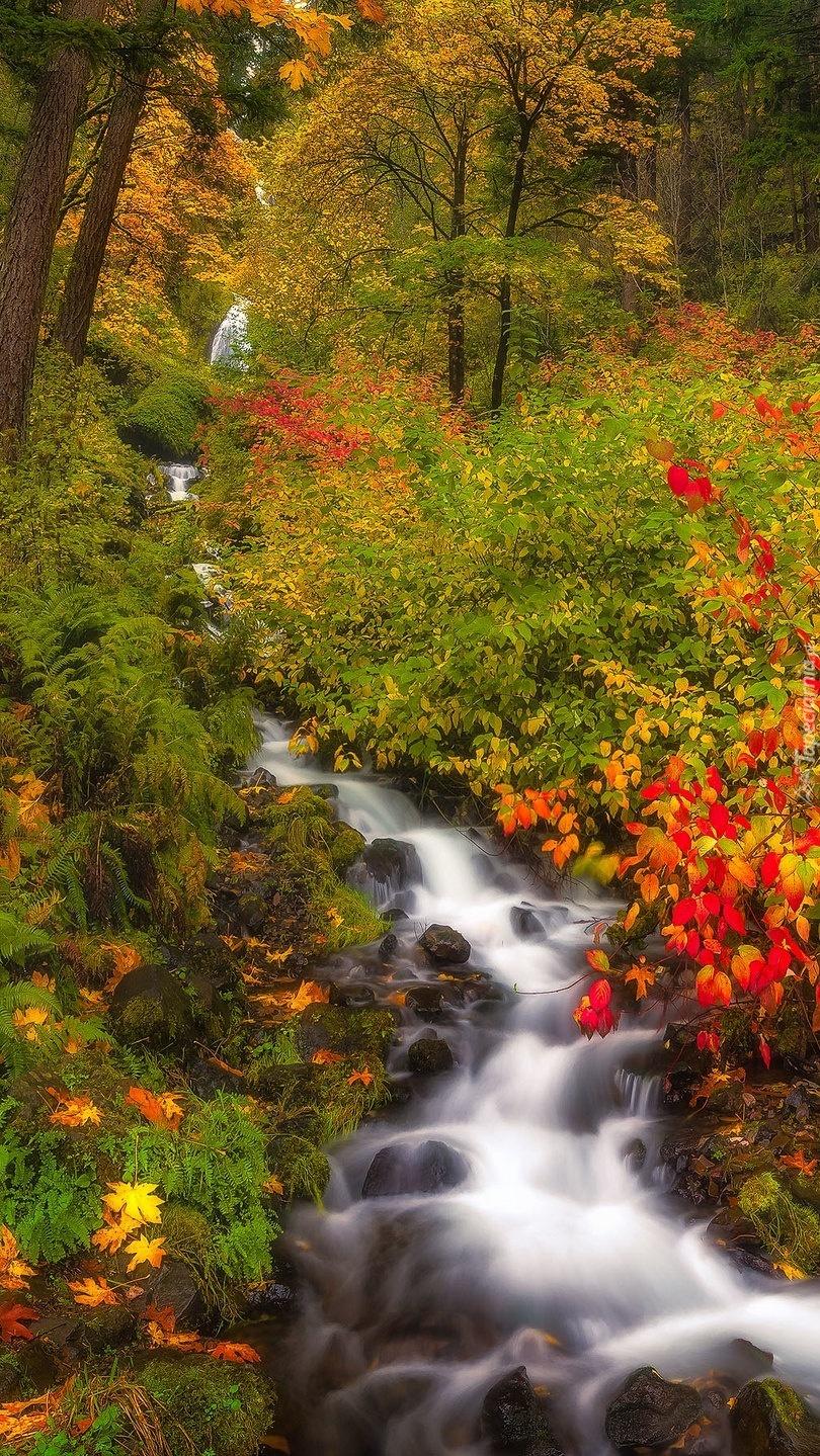 Kolorowe krzewy przy leśnej rzece